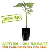 Die Jungpflanzen (Schweiz)